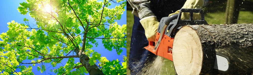 Tree Services Palmetto